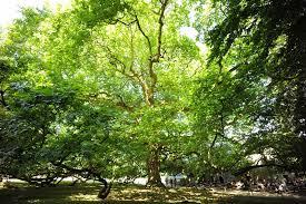 Les arbres remarquables de Georges Feterman, Jean-Pierre Duval-Caroline Breton